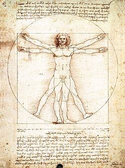 The proportions of the human body Da Vinci Leonardo